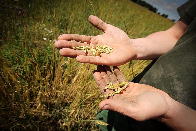 עבודה מועדפת בחקלאות