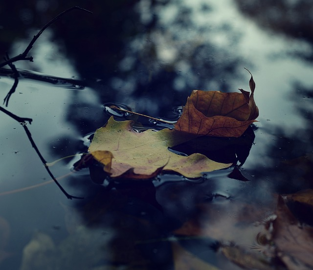 החשיבות של ניקוי וחיטוי מאגרי מים, ומה הקשר לבריאות שלנו?