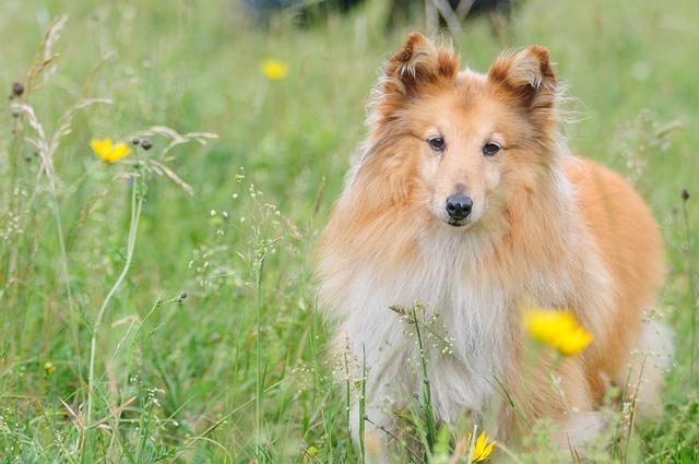 למה כלבים הם בעלי חיים מושלמים בשביל עזרה לבני אדם?