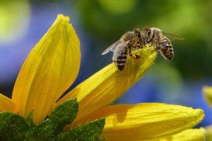 באילו מקומות בדרך כלל עושים הדברת דבורים