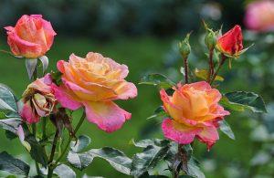 צמחים שכדאי לגדל בבית