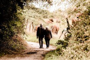 ארגון טיולים מקסימים לגמלאים